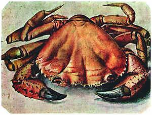 Альбрехт Дюрер. краб. 1495. Музей Бойманс ван Бенинген, Роттердам