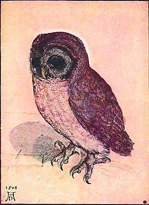 Альбрехт Дюрер. Маленький совенок. 1506. Галерея Альбертина, Вена